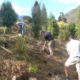 Wakatipu Reforestation Trust Planting Arrowtown